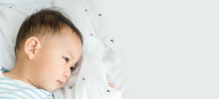 Tips Mencegah Demam Berdarah Dengue Pada Bayi